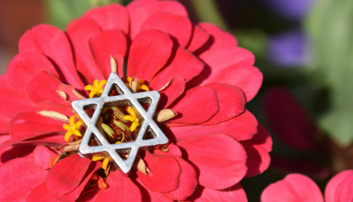 Bright pink flower with a yellow center and a small silver Star of David resting in the middle