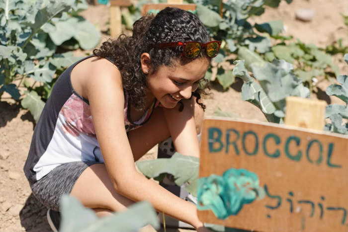 Girl crouched over planting broccoli next to a sign bearing the word in Hebrew