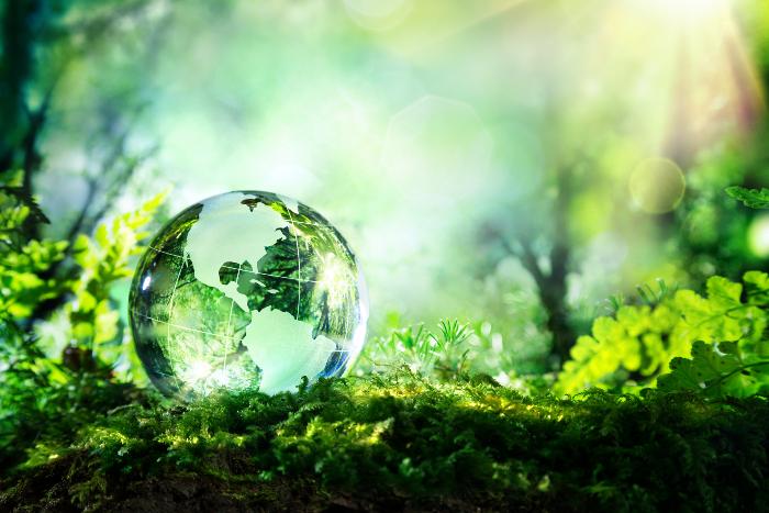 Glassy Earth globe on tree branch