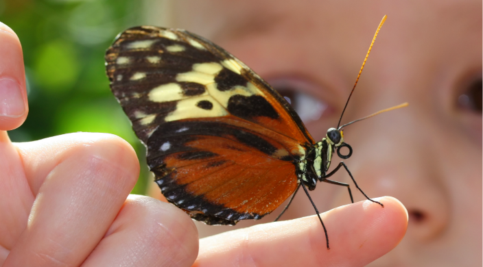 Close-up photo of young child examining butterfly resting on her index finger