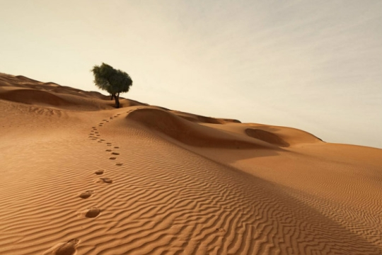 Footsteps in a sand dune headed uphill toward a tree