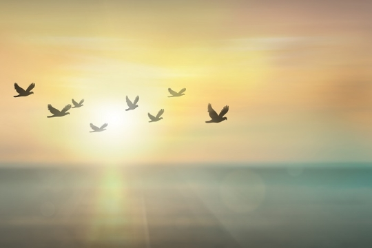 peace doves in flight
