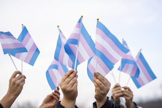 trans rights flags and hands