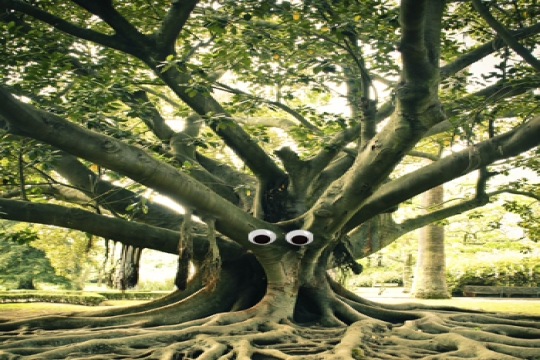 Travis the Tree - a Tu Bishvat story and activity for children
