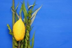 Lulav and etrog lying on a bright blue background