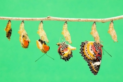 Time lapse image depicting the metamorphosis of caterpillar into a butterfly against a turquoise background