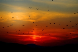 Sunset with birds flying against the background