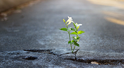 A flower growing in a crack in the road
