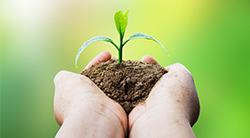 Two hands carefully holding a young plant, symbolizing how youth represent the future growth and sustaining of Judaism